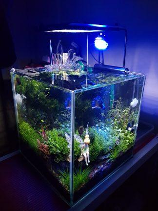 Tank Spotlight: 30CM CubeGarden