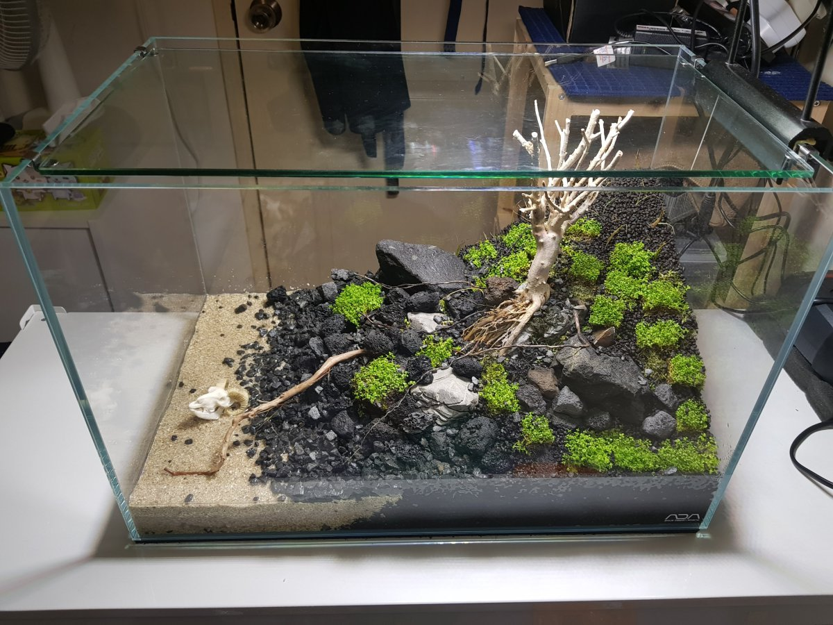 45CM Tank – The Set Up